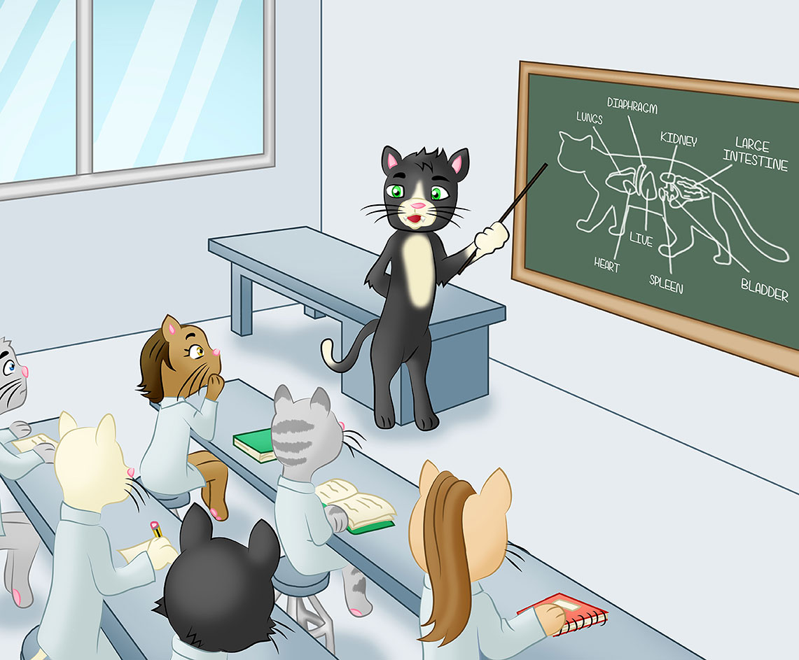 Cats in classroom learning
